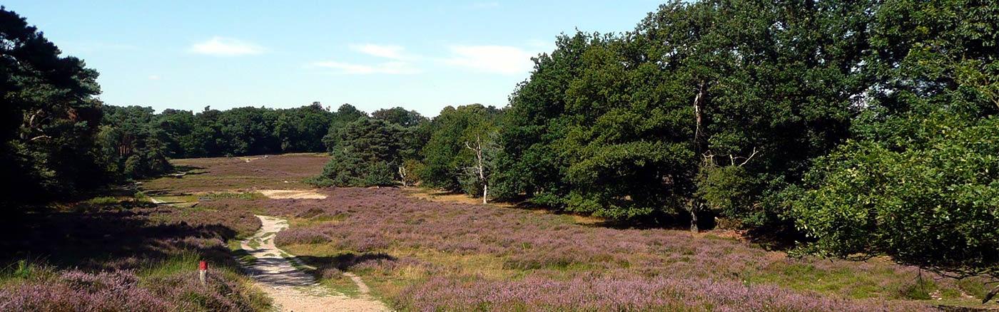 Heide bij Vegetarisch Woonpark Ommershof